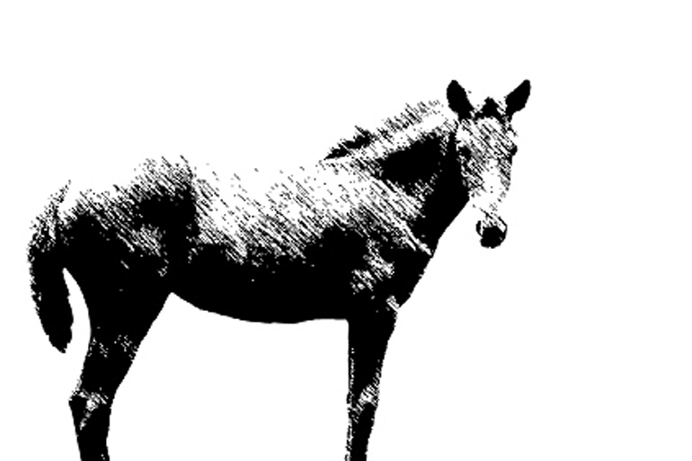 the-last-horseman-2